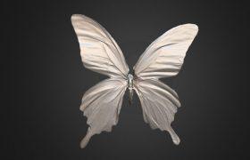 蝴蝶标本扫描